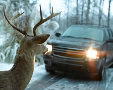 New York State Deer Car Insurance