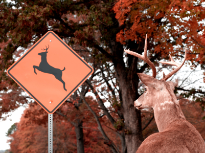 Fall brings cooler weather, beautiful colors and a spike your odds of having a deer accident.